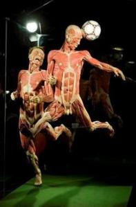 les plastifications de Gunther von hagens